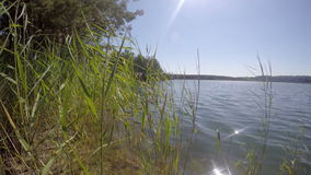 Grass sways in the wind on a blue lake in forest outdoor stock video