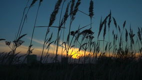 Grass sways in the wind, tranquil landscape at sunset, slow motion stock video footage