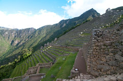 Grass terraces at Machu Picchu Royalty Free Stock Photo