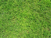 Grass texture 1 Royalty Free Stock Photos