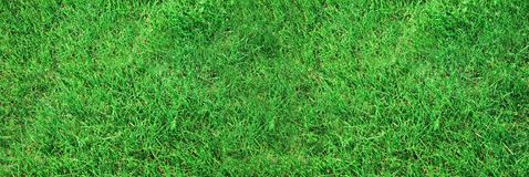 Free Grass Texture Royalty Free Stock Images - 103719989