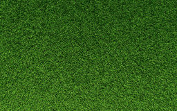 Grass Texture. Realistic grass texture on top view Stock Image