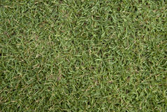 Grass Texture Royalty Free Stock Photography