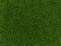 Grass texture. A grass texture of a cultivated land Stock Photo