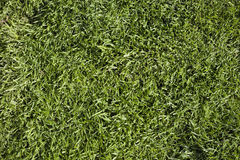 Grass texture Royalty Free Stock Photos