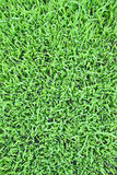 Grass texture. The grass texture and background Royalty Free Stock Image