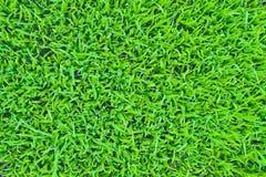 Grass texture Stock Photos