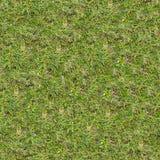 Grass Texture. Stock Image