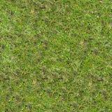 Grass Texture. Stock Photos