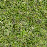 Grass Texture. Royalty Free Stock Images