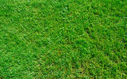 Grass texture Royalty Free Stock Photo