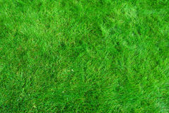 Free Grass Texture Royalty Free Stock Images - 3228069
