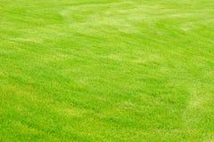 Green grass texture stock photography