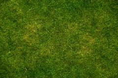 Grass Texture Background Stock Photography