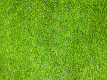 Grass Texture background. The best of Grass Texture background Royalty Free Stock Photography