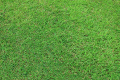 Grass texture. Background Royalty Free Stock Photos