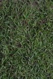 Grass texture background. For business stock image