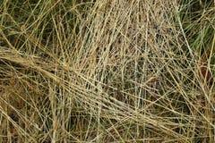 Grass texture - background. Stock Photos