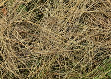 Grass texture - background. Stock Images