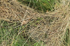 Grass texture - background. Stock Photo