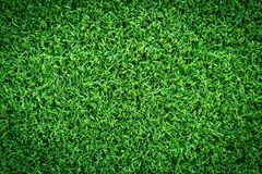 Grass texture or grass background. Green grass for golf course, soccer field or sports background concept design. Grass field texture for golf course, soccer Royalty Free Stock Photos