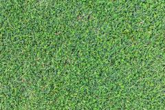 Grass texture or grass background. green grass for golf course, soccer field or sports background concept design. Natural green grass Royalty Free Stock Photo