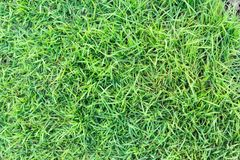 Grass texture or grass background. green grass for golf course, soccer field or sports background concept design. Natural green grass Stock Photos