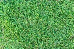 Grass texture or grass background. green grass for golf course, soccer field or sports background concept design. Natural green grass Stock Photo