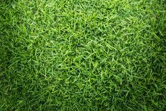 Grass texture or grass background. Green grass for golf course, soccer field or sports background concept design. Grass field texture for golf course, soccer Royalty Free Stock Images
