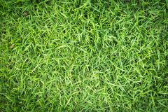 Grass texture or grass background. Green grass for golf course, soccer field or sports background concept design. Grass field texture for golf course, soccer Stock Photo