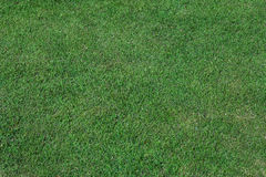 Grass texture background. Green Grass texture background seamless royalty free stock photography