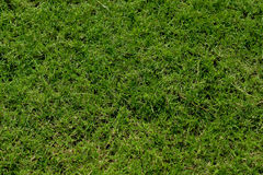 Grass texture background. Green grass seamless texture background from top view stock image