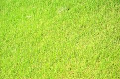Grass texture for background Royalty Free Stock Images