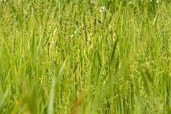 Grass Texture Royalty Free Stock Photos