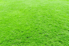 Grass texture from Stock Photo