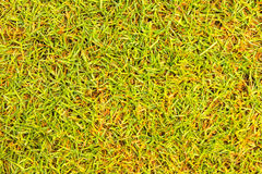 Grass texture Golf Course for design pattern and background. Grass texture Golf Course for design pattern and background Stock Photo