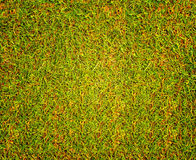 Grass texture Golf Course for design pattern and background. Stock Photos
