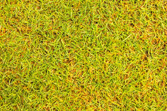 Grass texture Golf Course for design pattern and background. Grass texture Golf Course for design pattern and background Royalty Free Stock Photo