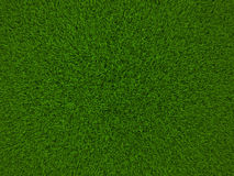 Grass. Texture grass,the green background stock images