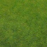 A grass texture Stock Images