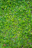 Grass Texture. Green Bold Grass Texture to use as texture on 3D models or other projects royalty free stock photo