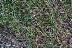 Grass Texture Ground Green Dead Blades Detail Background Nature Stock Photo