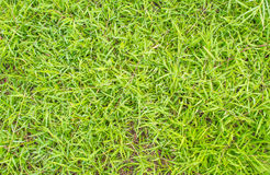 grass texture image for background usage. Stock Image