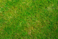Grass Texture. Grass lawn texture from directly above Royalty Free Stock Images