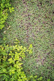 Grass texture in nature place . Royalty Free Stock Photos