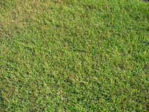 Grass texture. Short grass natural texture background Royalty Free Stock Photos