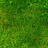 Grass texture Stock Photos