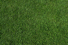 Grass texture (zenith) Stock Photography