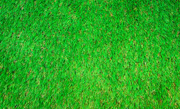 Grass textures Royalty Free Stock Image