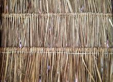 Grass thatch roof pattern closeup. A background image of the natural pattern or the rows of thatched grass tied in bundles to create the palapa style indigenous Stock Images